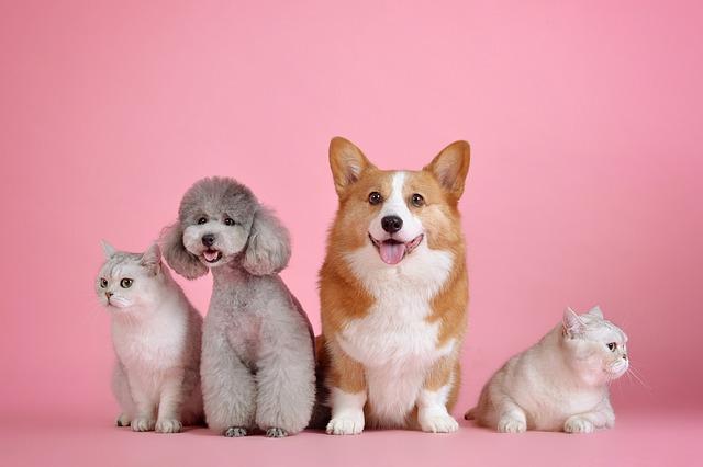 pienso para perros Villafranca